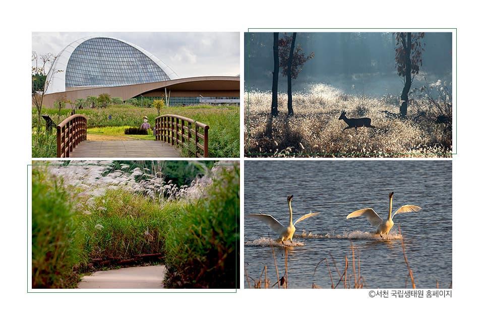 시계방향으로 서천 국립생태원 내외부, 이미지 출처 서천 국립생태원 홈페이지