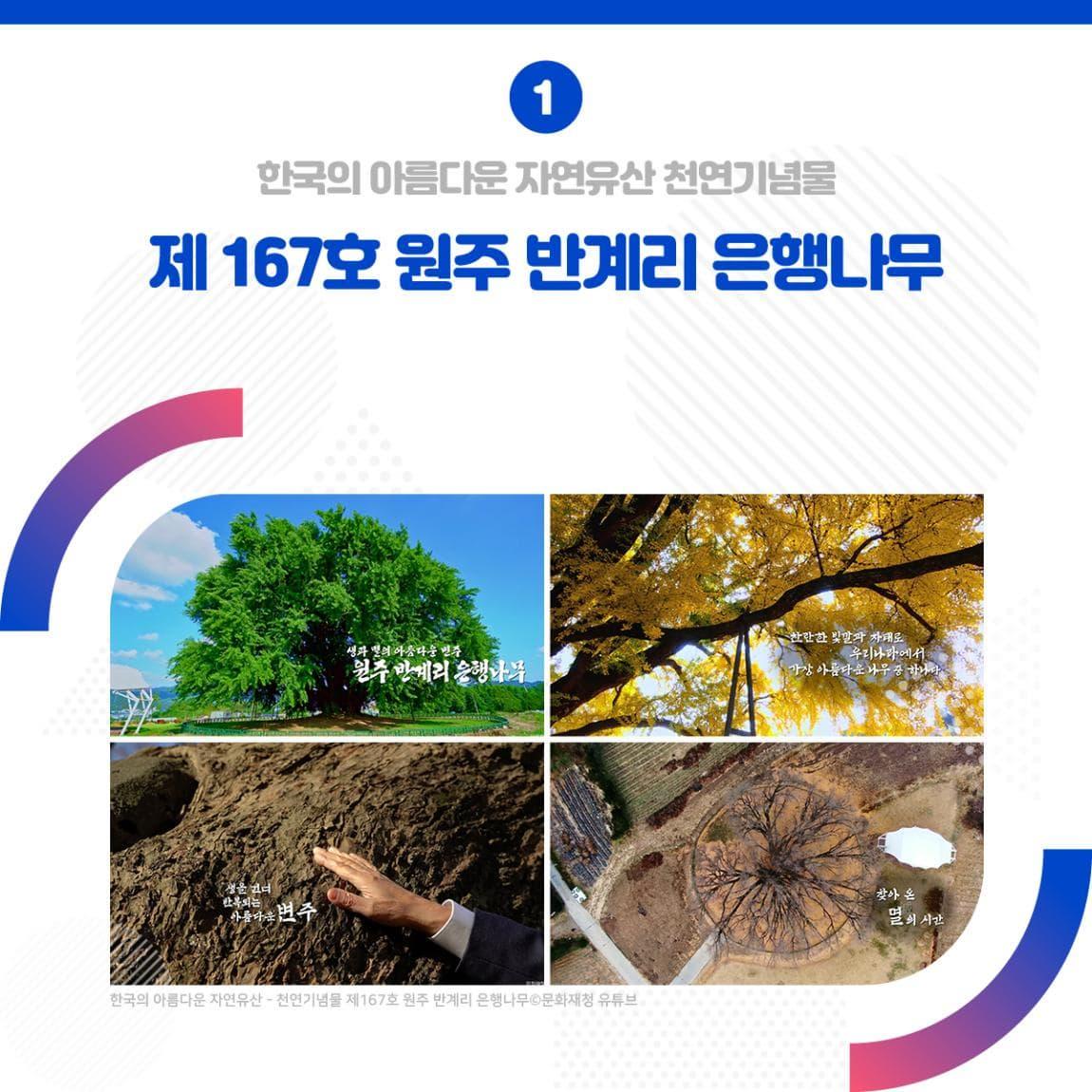 1 한국의 아름다운 자연유산 천연기념물 제167호 원주 반계리 은행나무