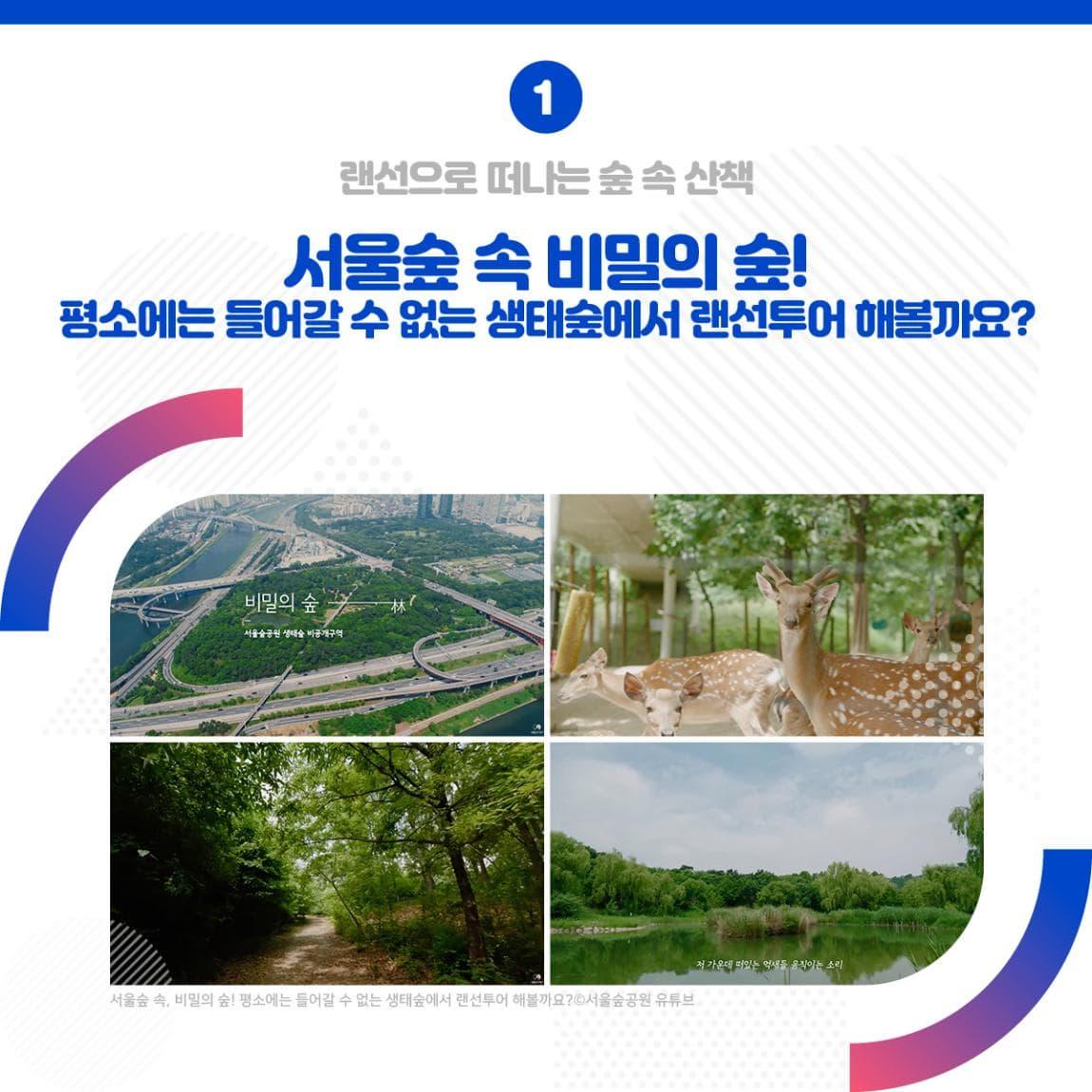 랜선으로 떠나는 숲 속 산책 <서울숲 속 비밀의 숲! 평소에는 들어갈 수 없는 생태숲에서 랜선투어 해볼까요?>